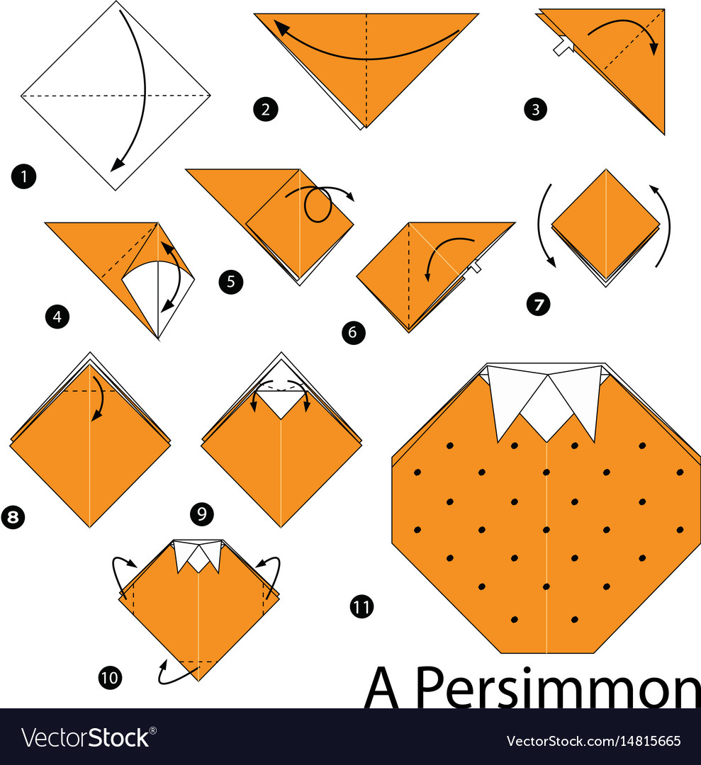 Instructions how to make origami a persimmon vector image