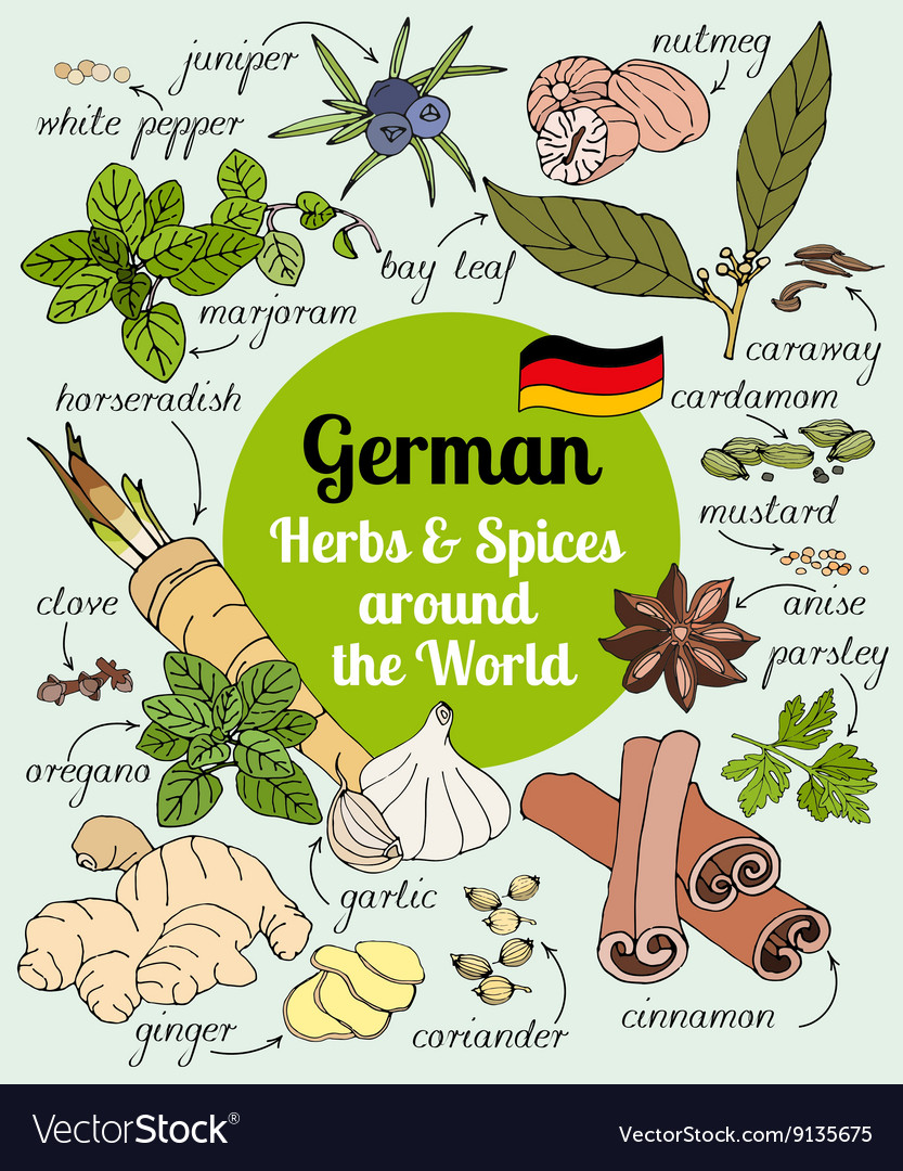 German herbs and spices vector image