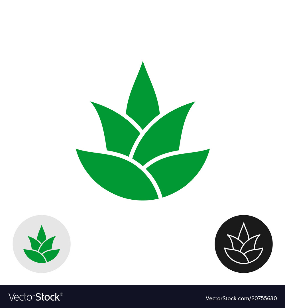 Aloe vera plant isolated icon aloe leaves logo