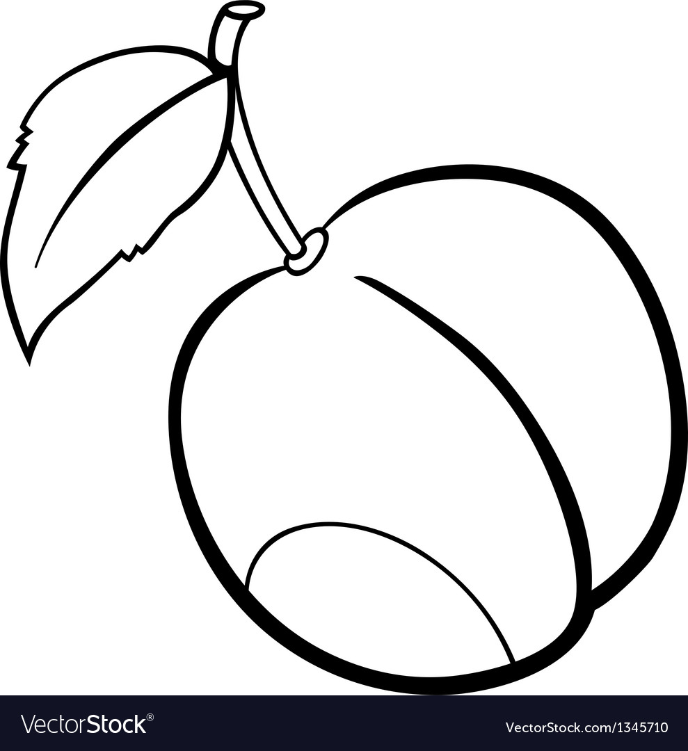 Plum Fruit For Coloring Book Vector Image