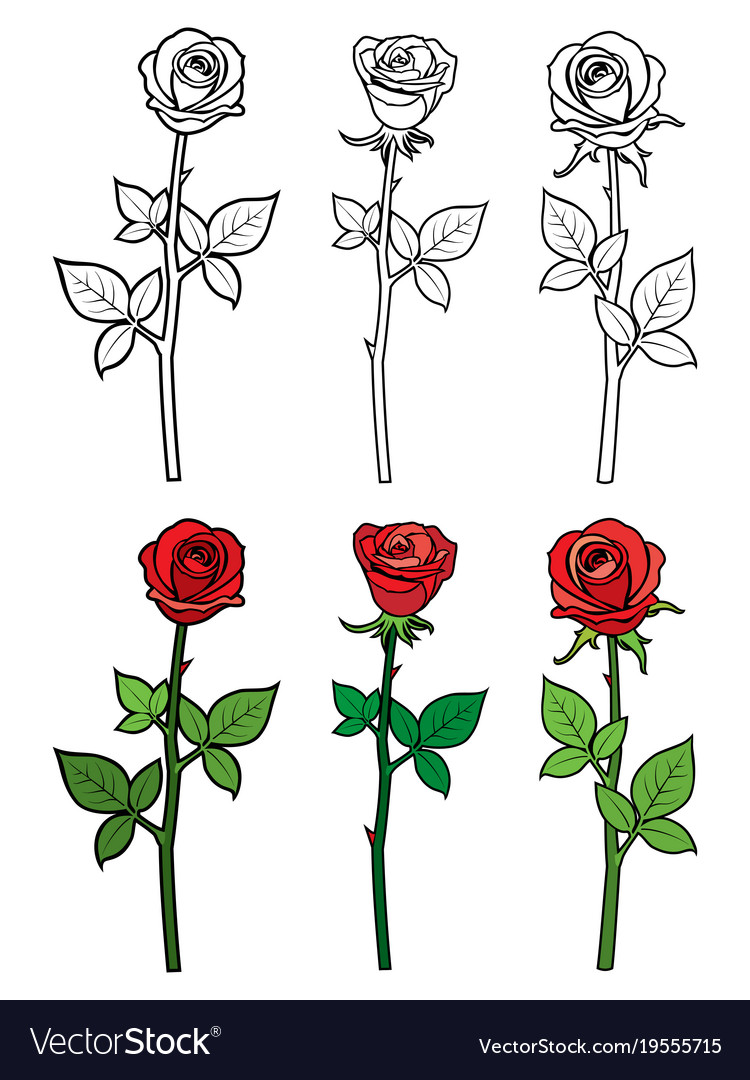 Hand drawn ouline and red roses - flowers