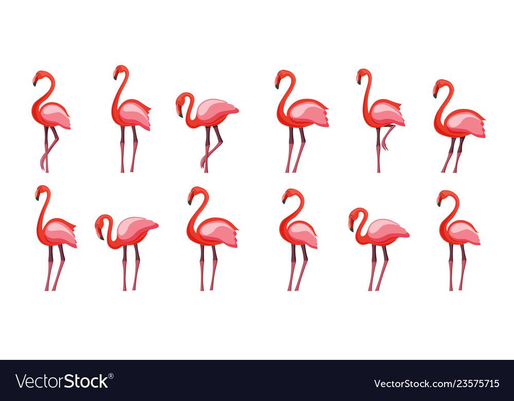 Pink flamingo set isolated on
