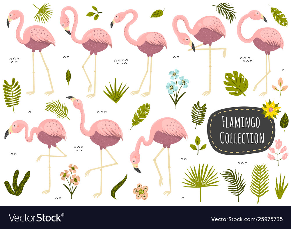 Flamingos and plants tropical collection