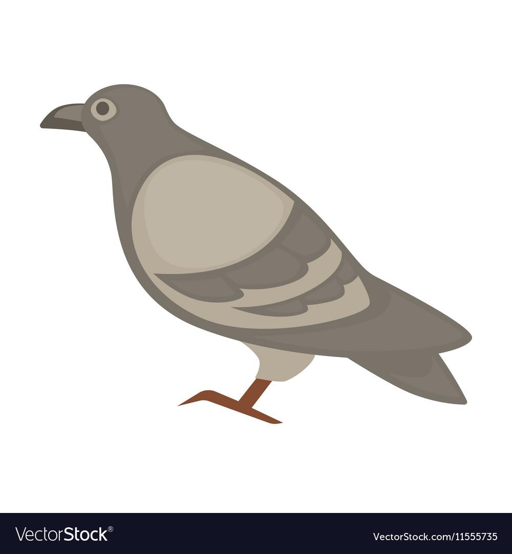 Pigeon cartoon bird isolated vector image