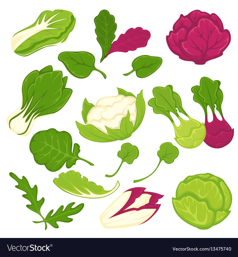 Lettuce salads leafy vegetables isolated