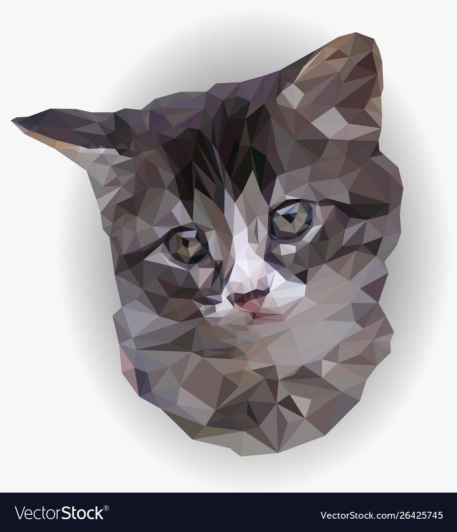 Portrait gray and white kitten poly art