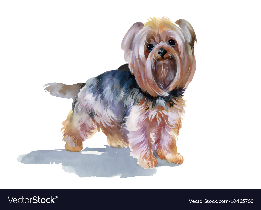 Hand Drawn Cute Yorkshire Terrier Dog Royalty Free Vector