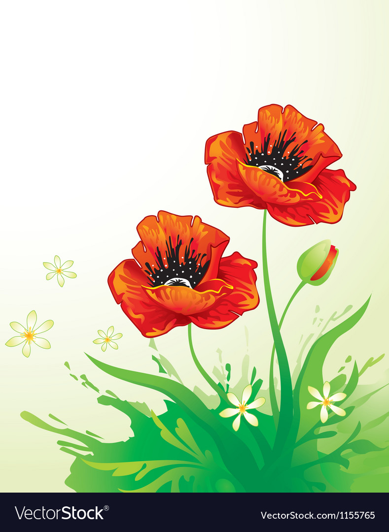 Natural background with poppy vector image