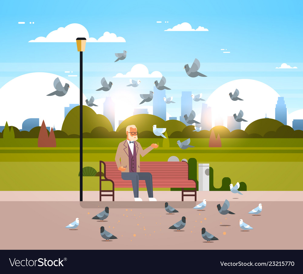 Senior Man Feeding Flock Of Pigeon Sitting Wooden