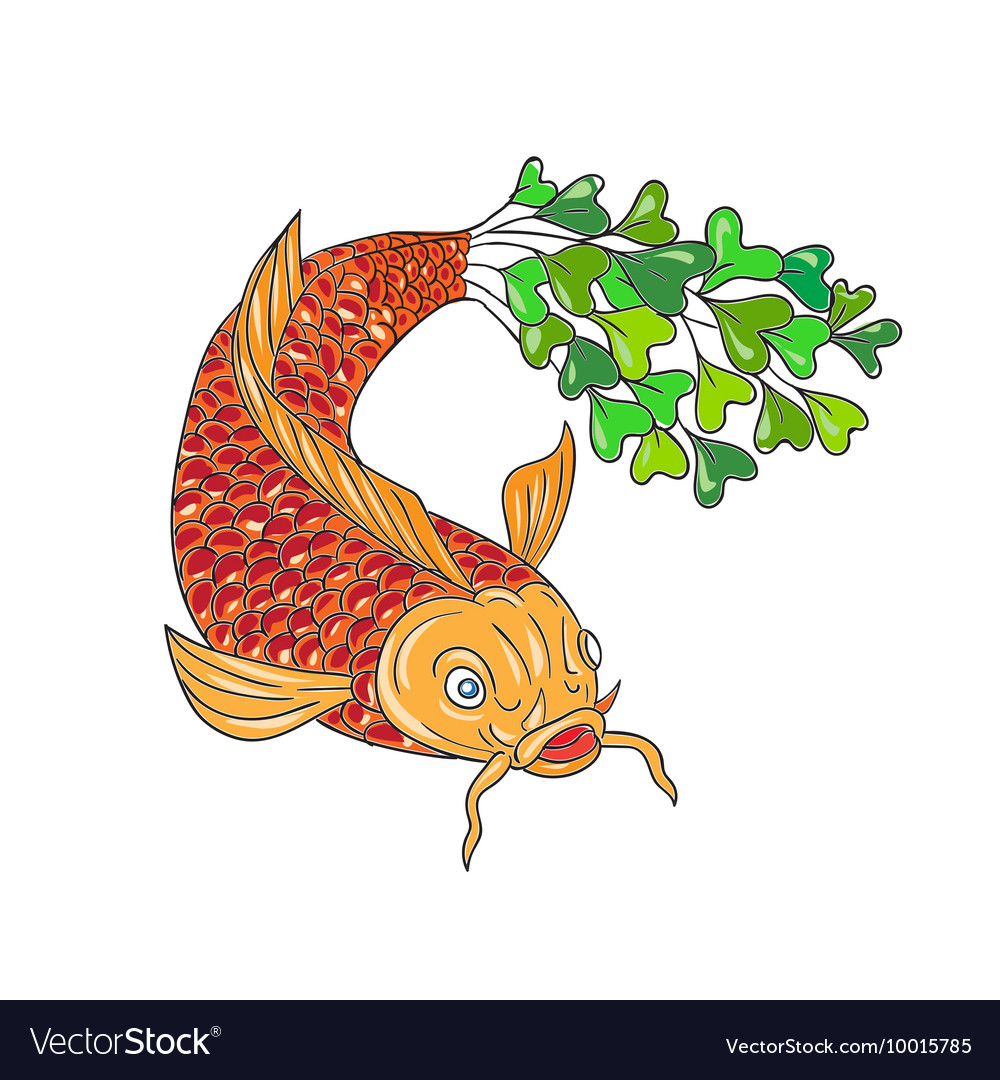 Koi Nishikigoi Carp Fish Microgreen Tail Drawing vector image