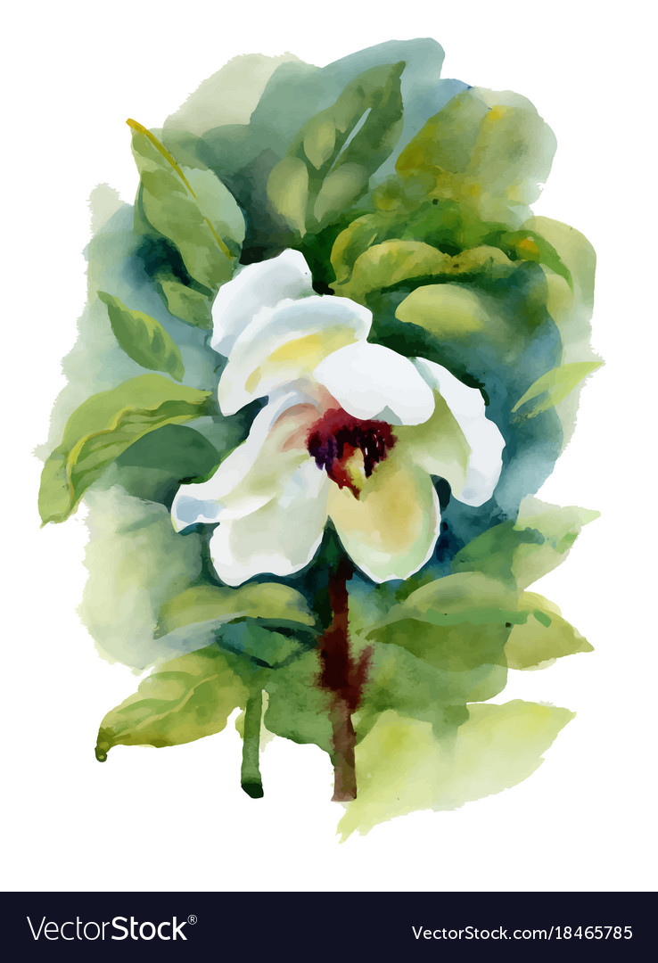 Summer White Watercolor Flower On White Background