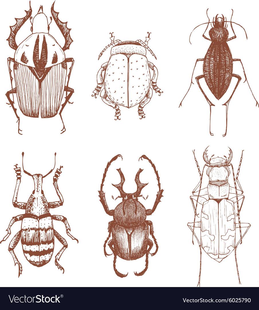 Nice hand drawn beetles