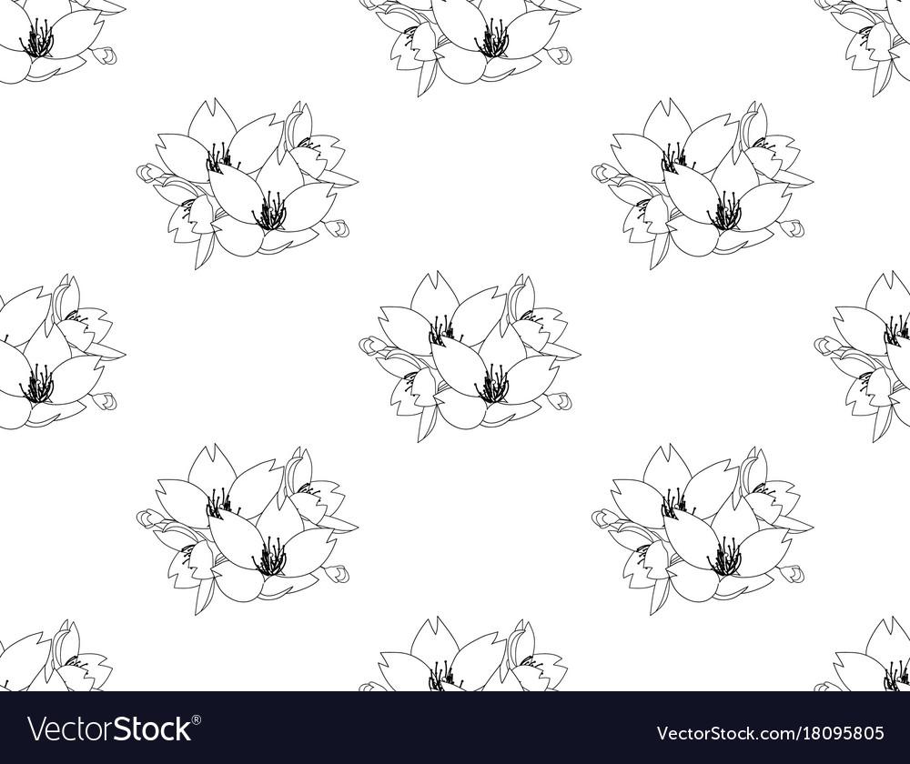 Sakura cherry blossom flower seamless on white vector image