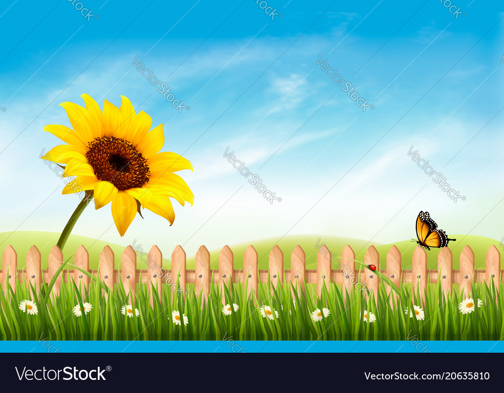 Summer nature landscape background with sunflower