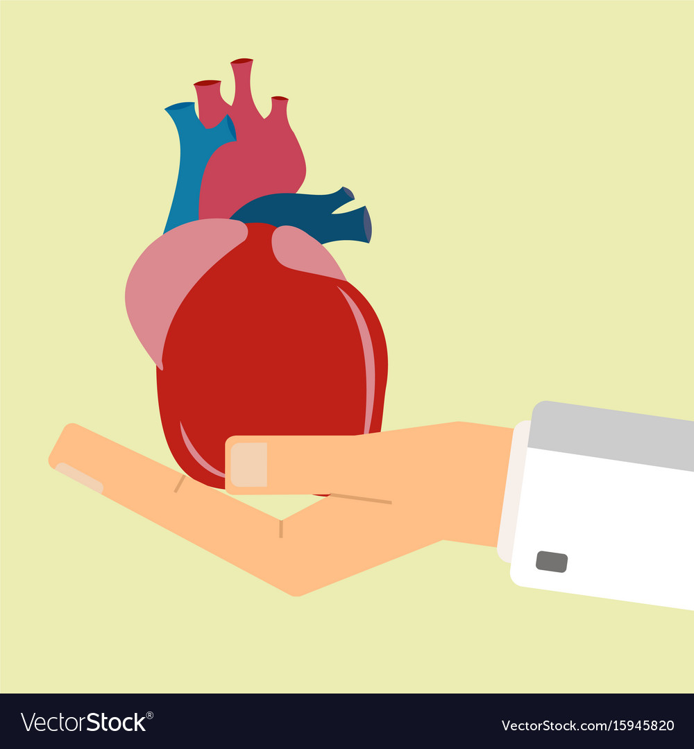 Doctors hand hold human heart healthcare concept