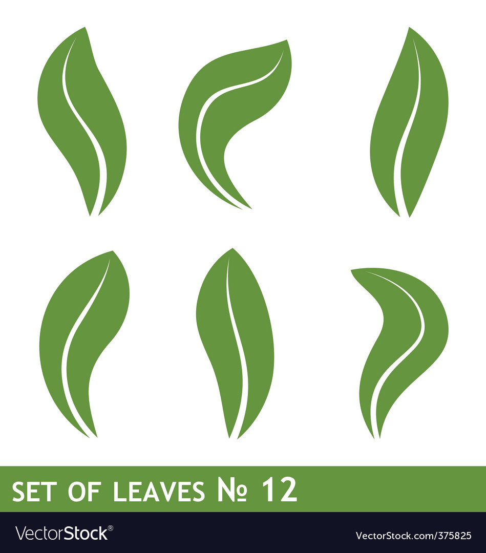 Leaves design vector image