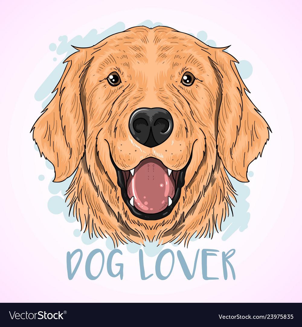 Dog cute golden