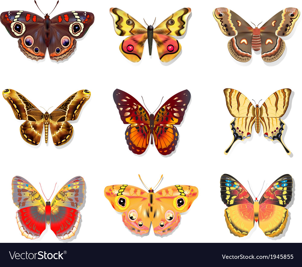 Set beautiful butterfly