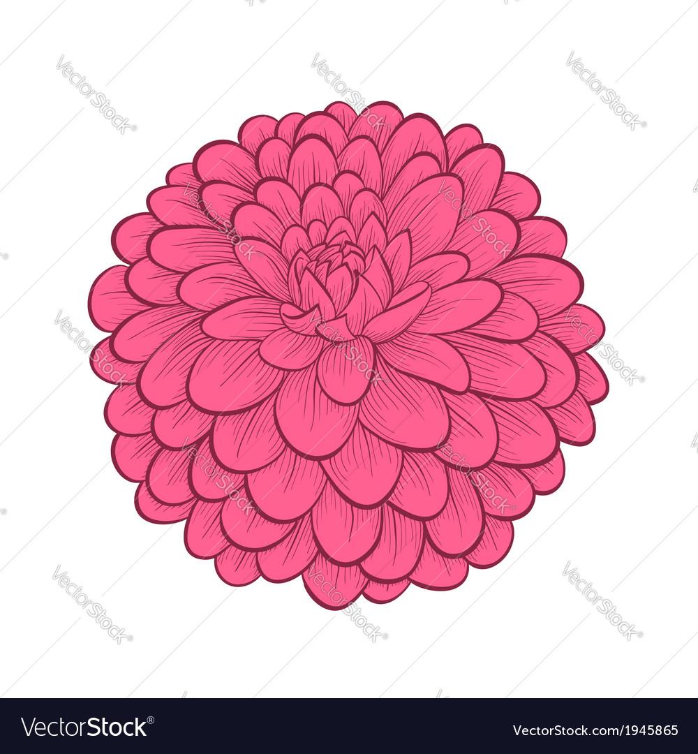 Dahlia Flower Royalty Free Vector Image Vectorstock