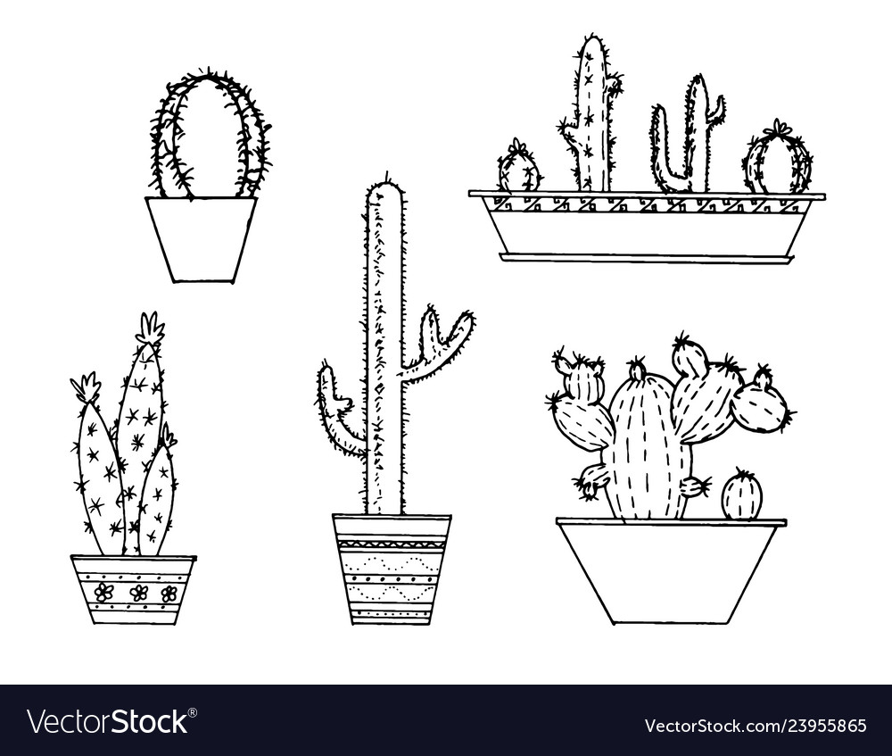 Set of hand drawn cactus sketch