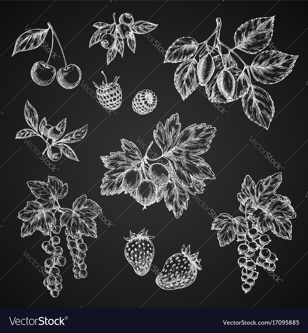 Chalk sketch icons of berries fruits