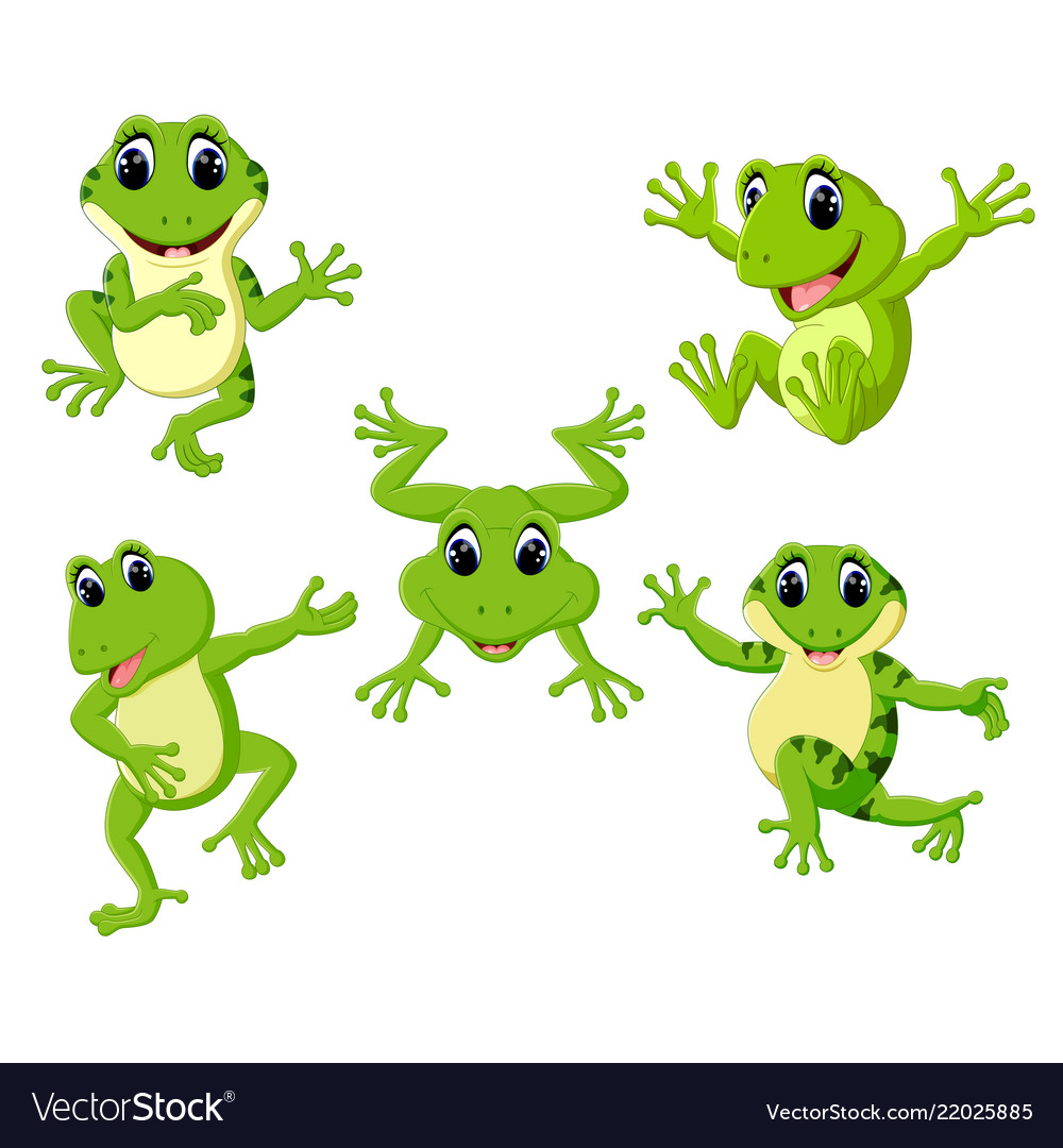 Collection of the beautiful green frog