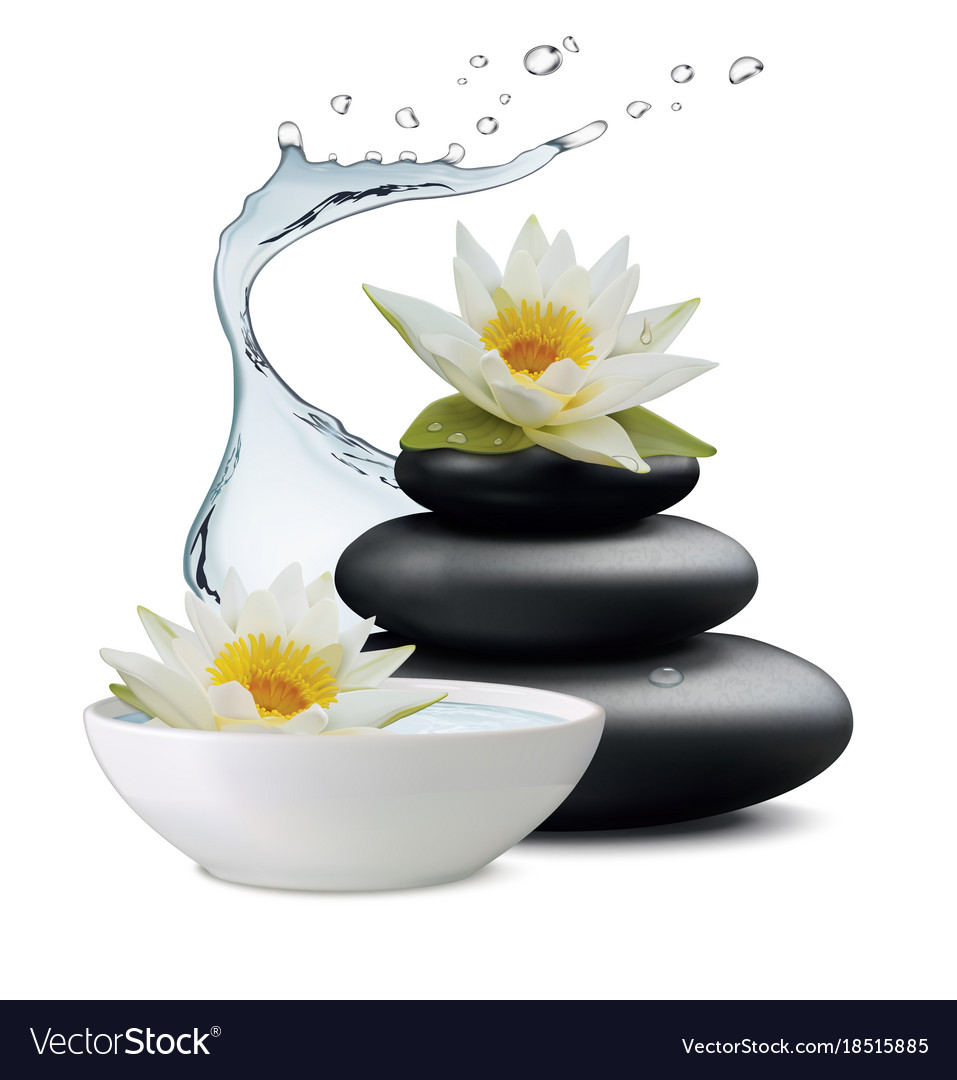 Water lily flowers and zen stone bowl with water vector image izmirmasajfo