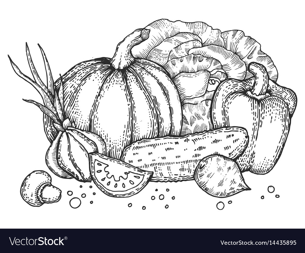 Vegetables engraving style vector image