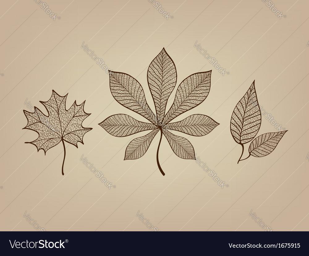 Autumn leaves lace