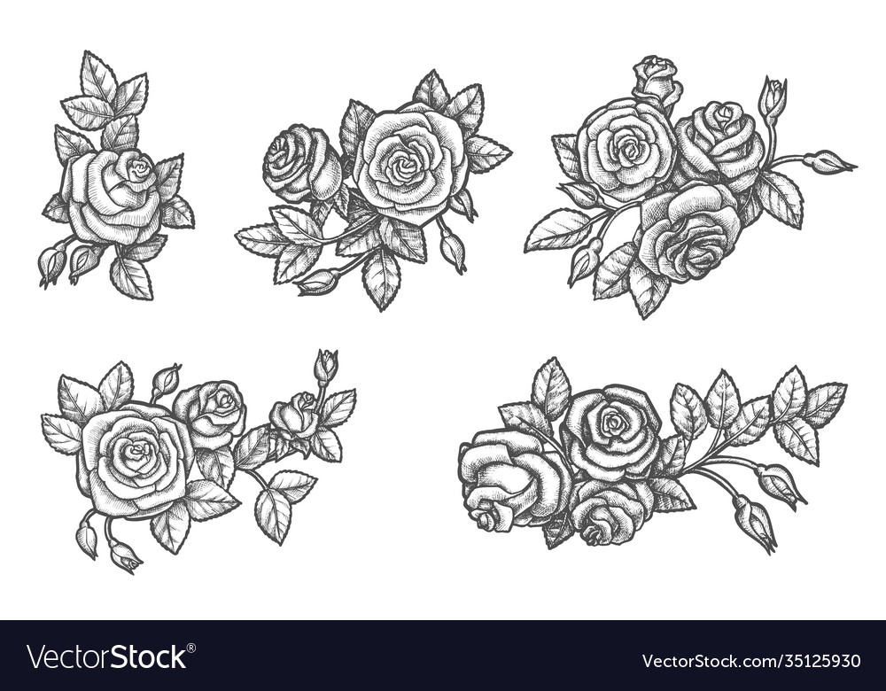 Set isolated rose flower sketch plant drawing
