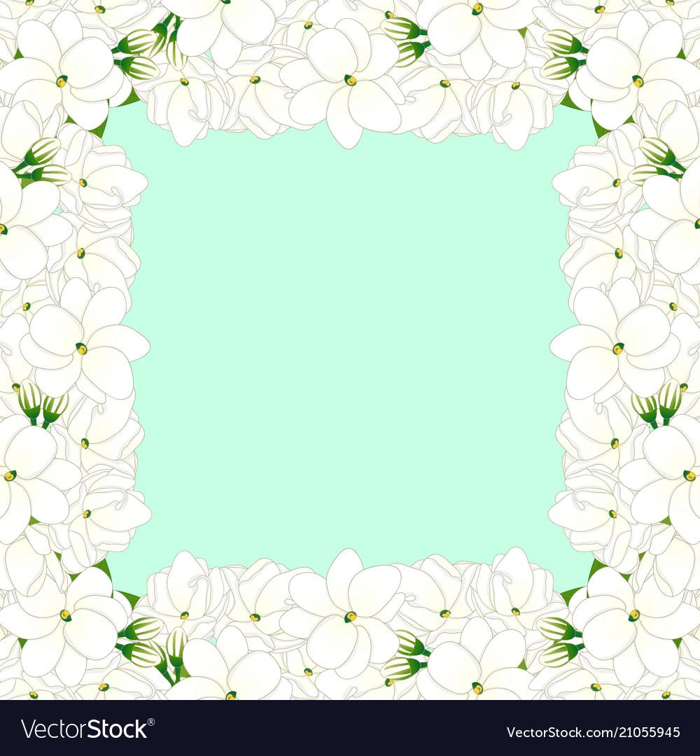 Arabian jasmine border on green mint background vector image izmirmasajfo