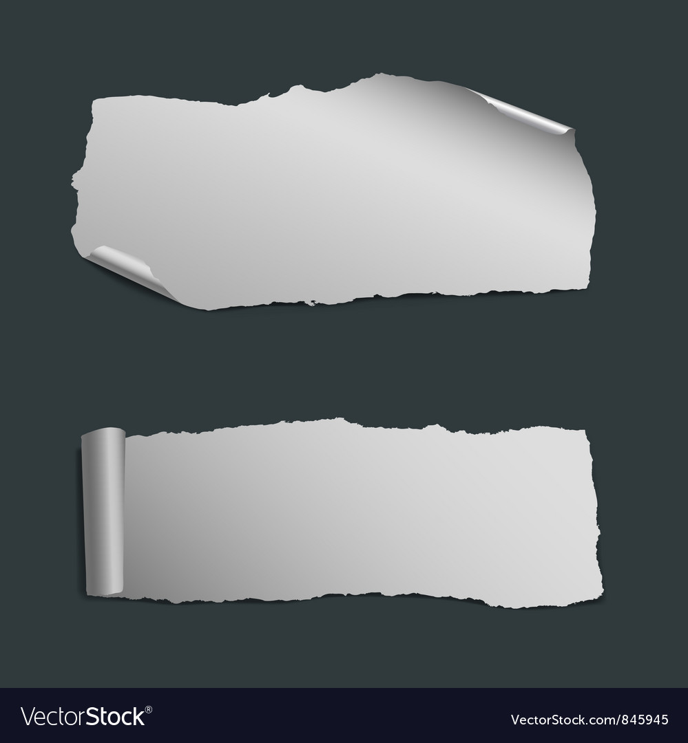 Collection of white ripped paper pieces vector image