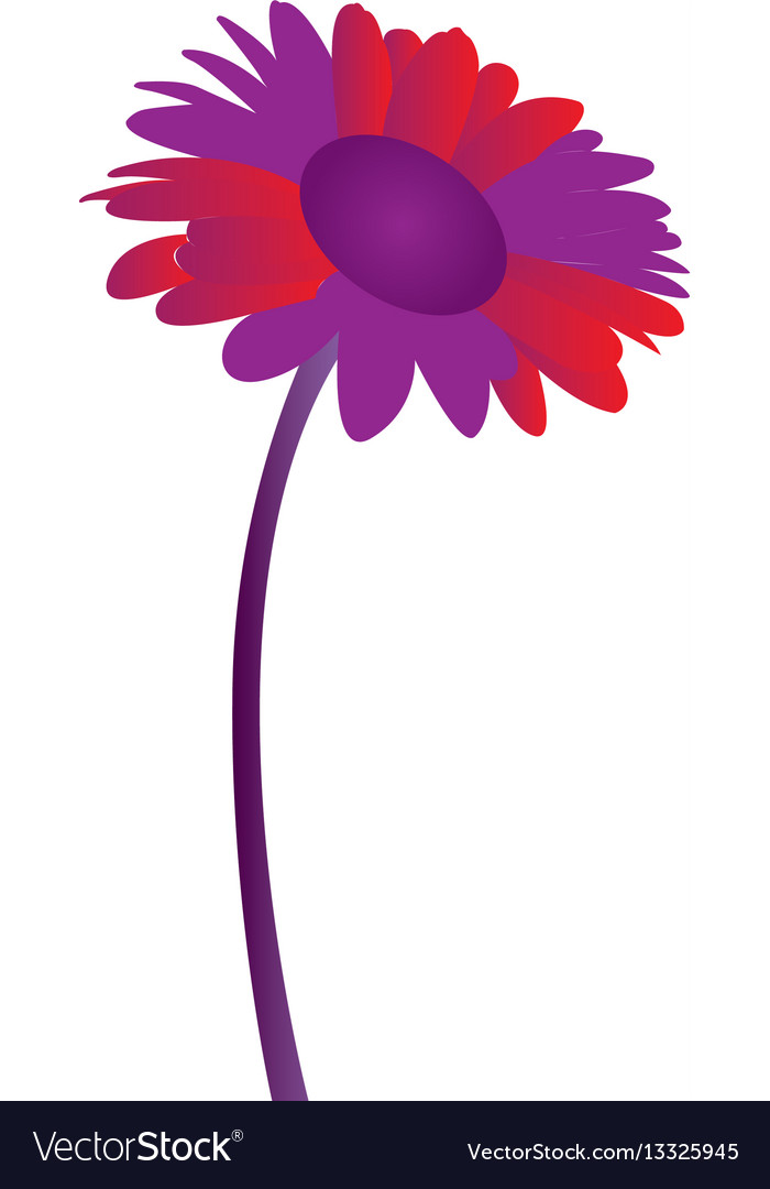 Isolated colored flower