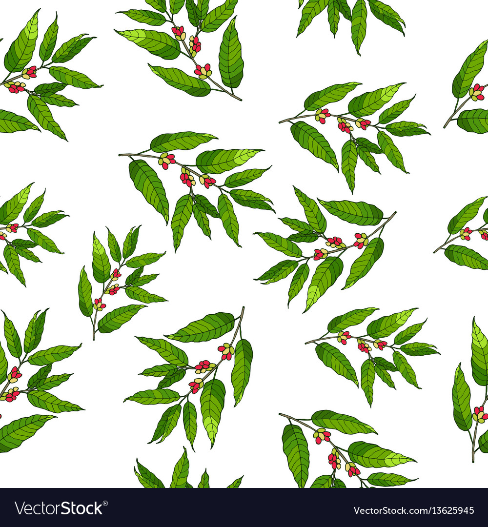 Seamless pattern with hand drawn coffee vector image