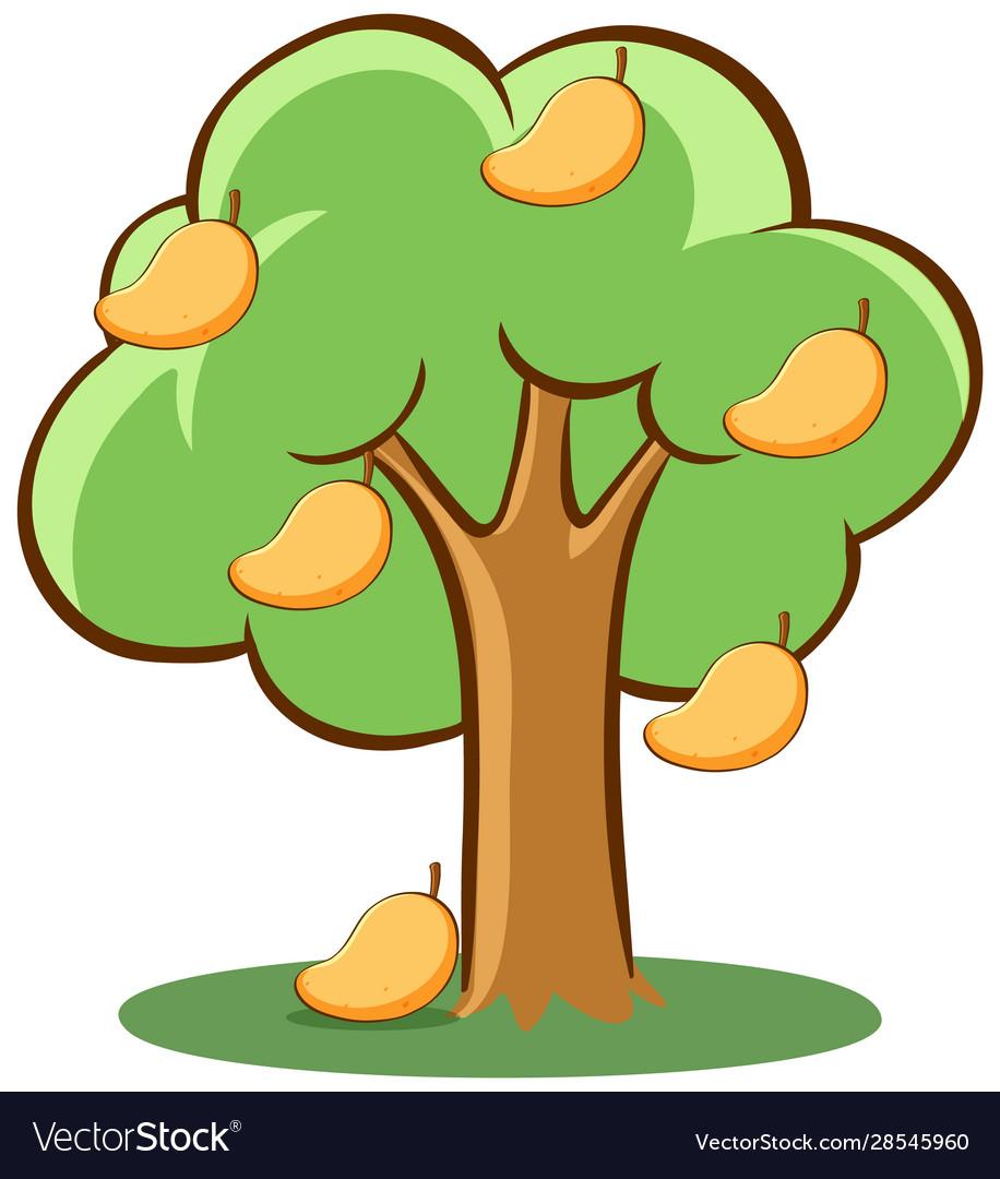 Mango Tree On White Background Royalty Free Vector Image