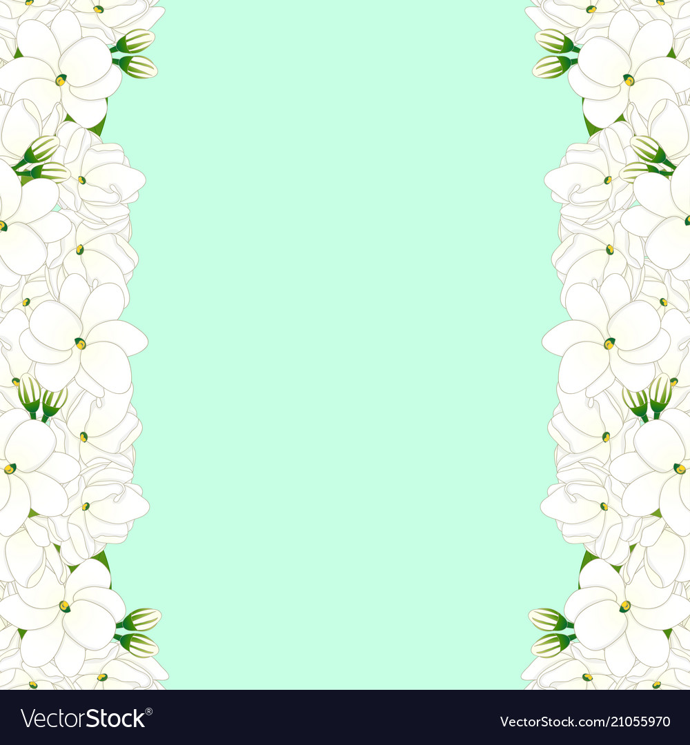 Arabian Jasmine Border On Green Mint Background Vector Image