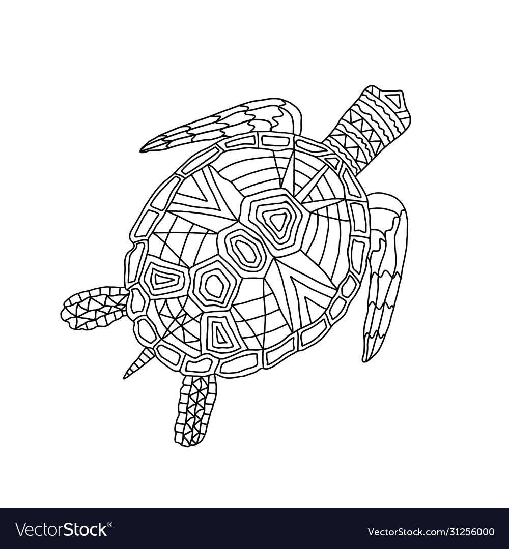 Tortoise Colouring Vector Images 65