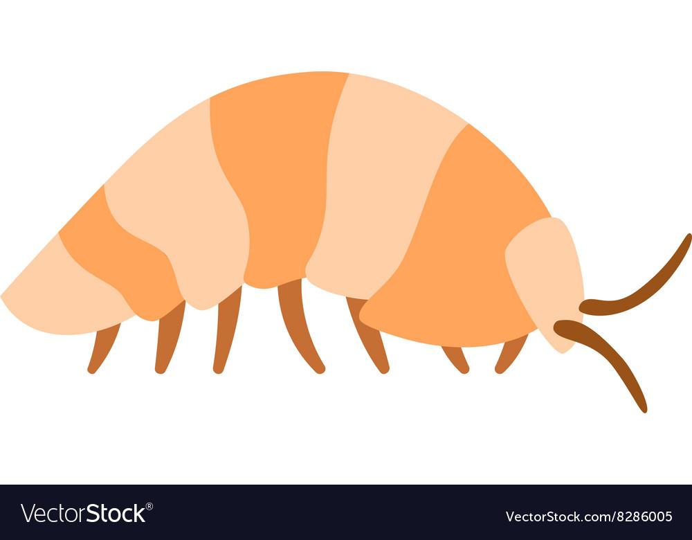 Beetle wood louse exoskeleton armadillo armor vector image