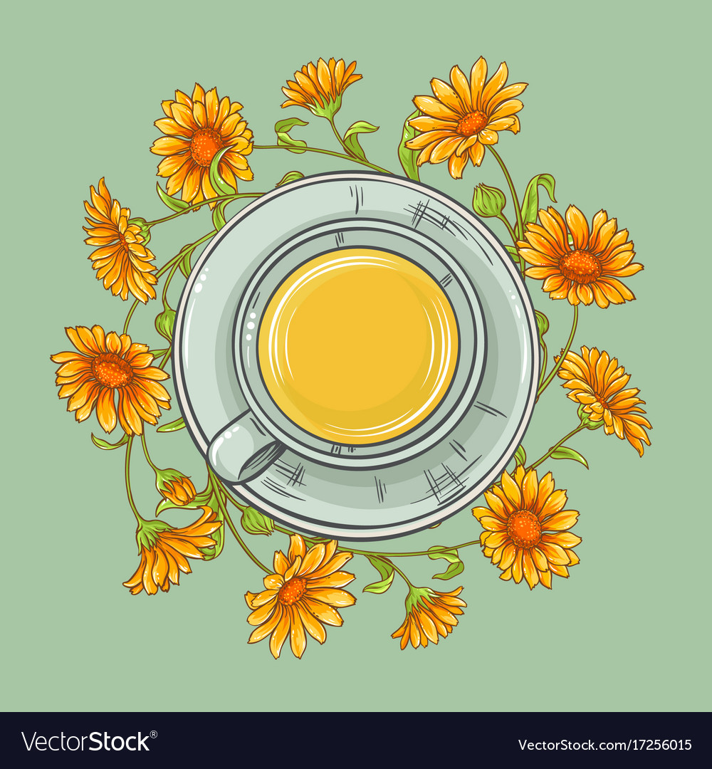 Cup of calendula tea vector image