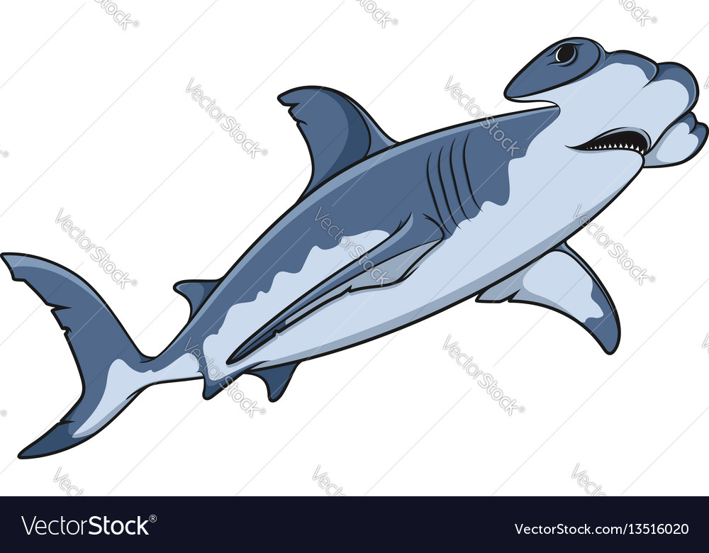 Color of the hammerhead shark Royalty Free Vector Image