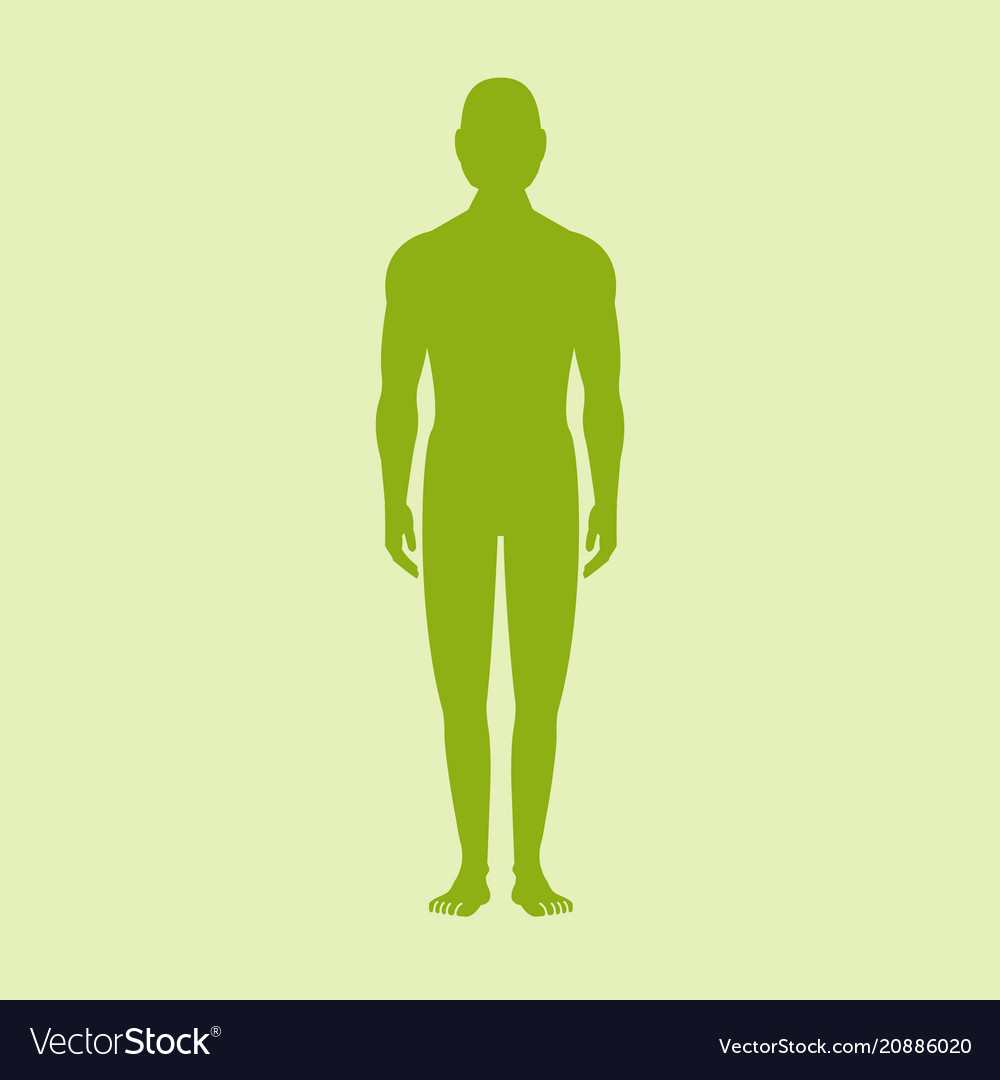 male human body silhouette with shadow royalty free vector vectorstock