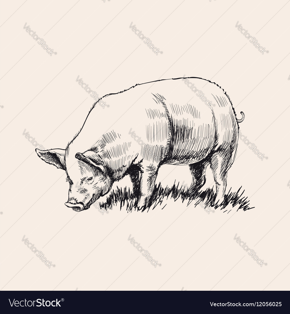 Hand Drawn Sketch Pig
