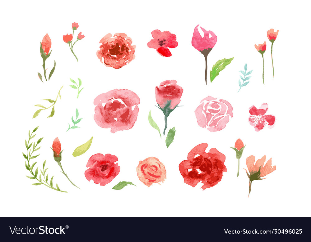 Watercolor aquarelle roses and leaves