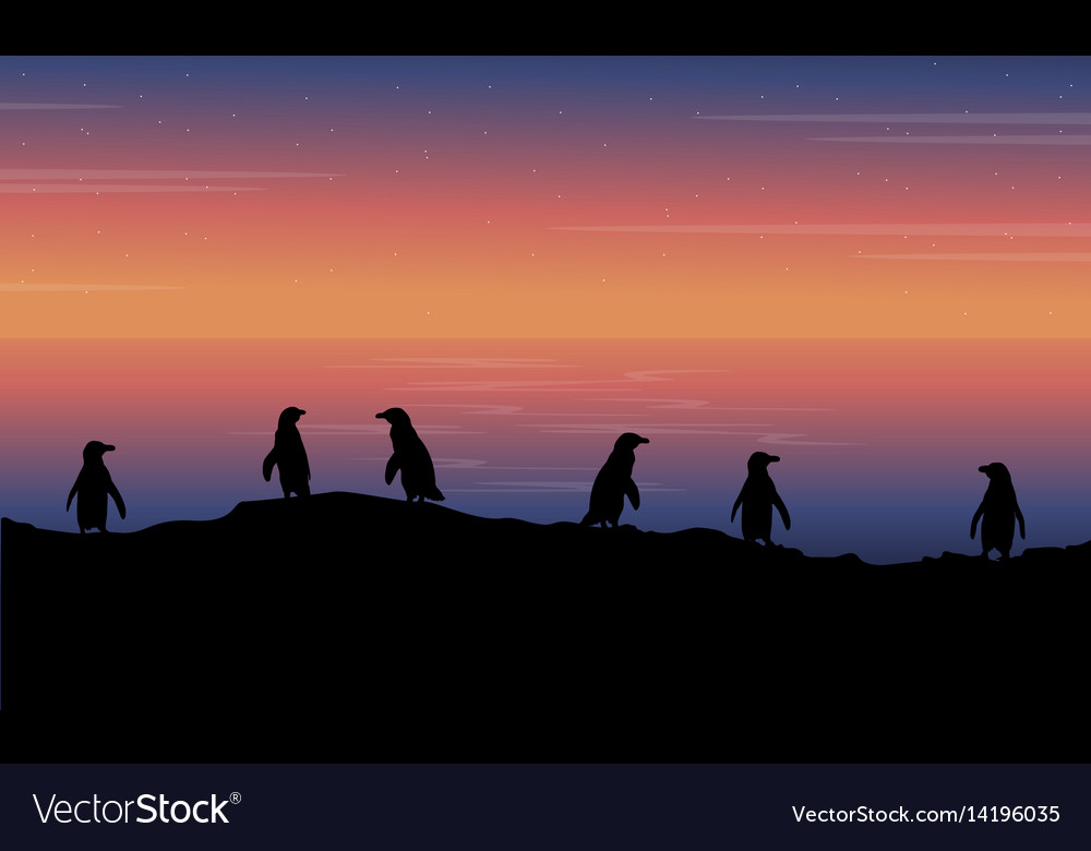 Beauty landscape penguin at sunset