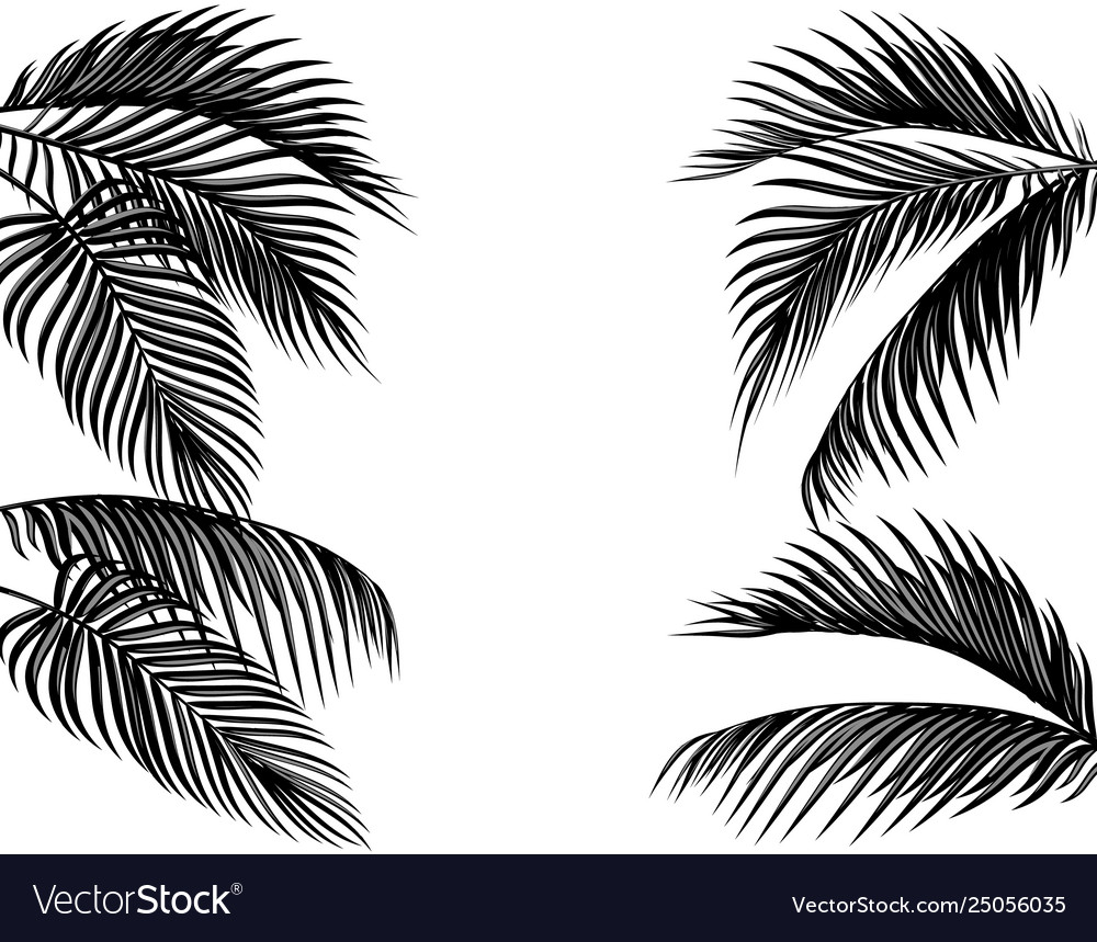 Set Black And White Tropical Palm Leaves Vector Image Tropical leaves in black and white vector. vectorstock