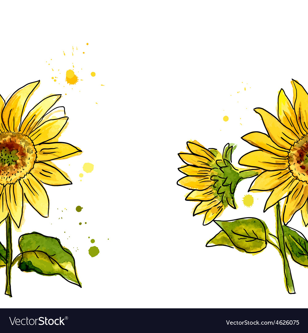 The composition of yellow sunflower painted in