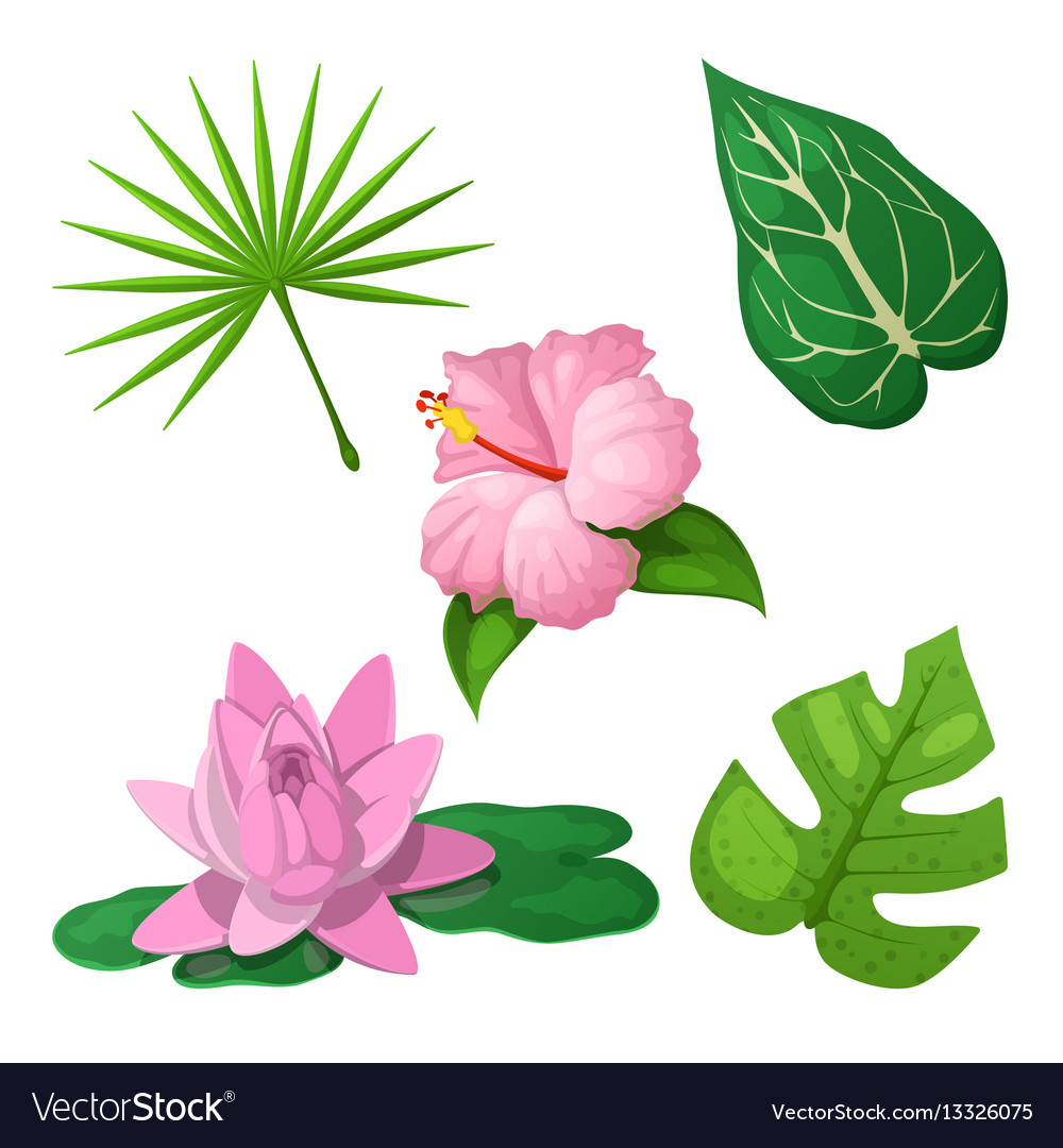 Tropical flowers and leaves for decoration