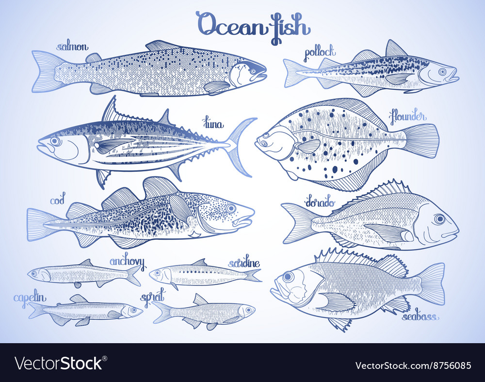 Graphic ocean fish collection vector image