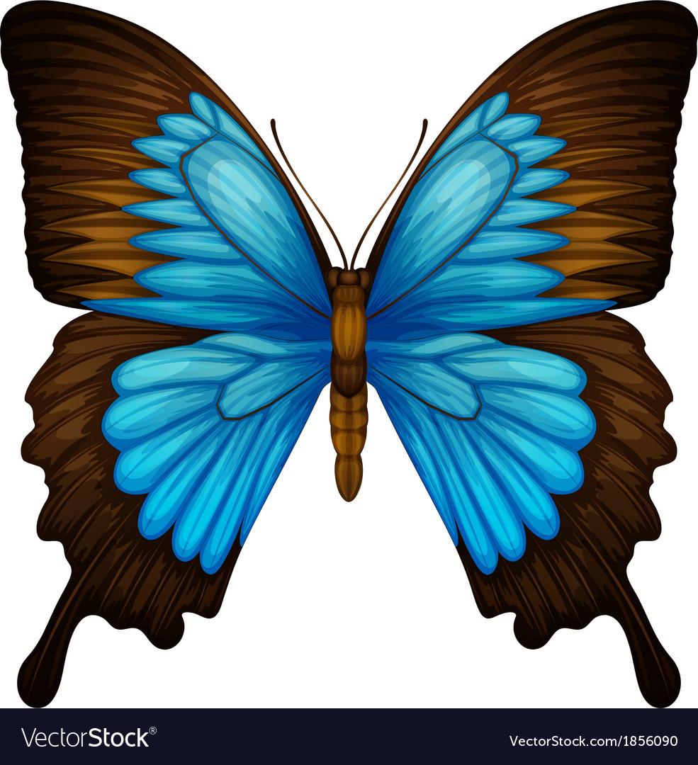 Бабочка 1.pdf | Butterfly | Pupa | 1080x985