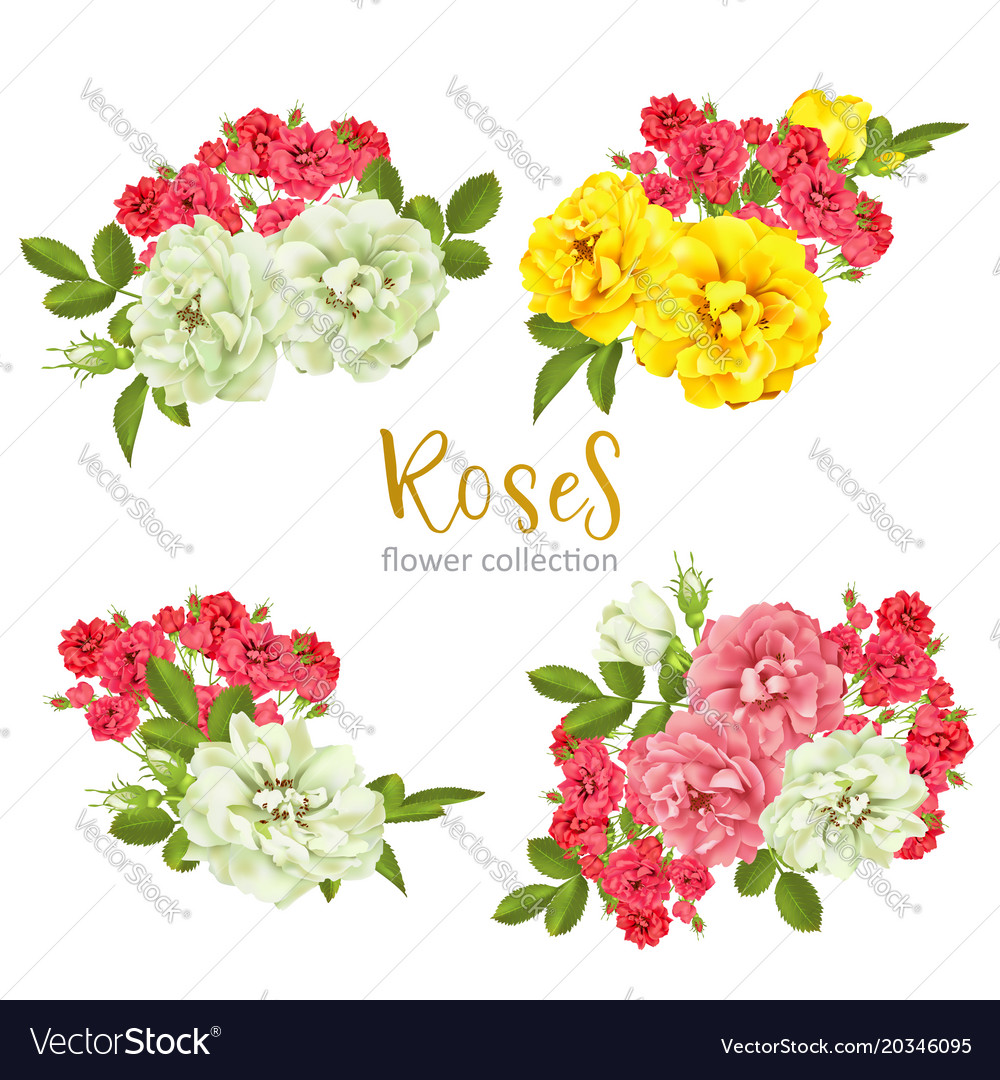Set collection flowers roses on white background vector